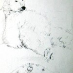 Orsi polari, grafite su carta